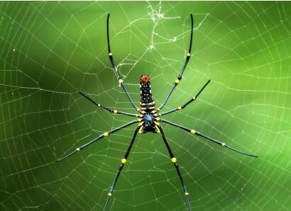 西安黑帽seo培训之蜘蛛池的原理解析